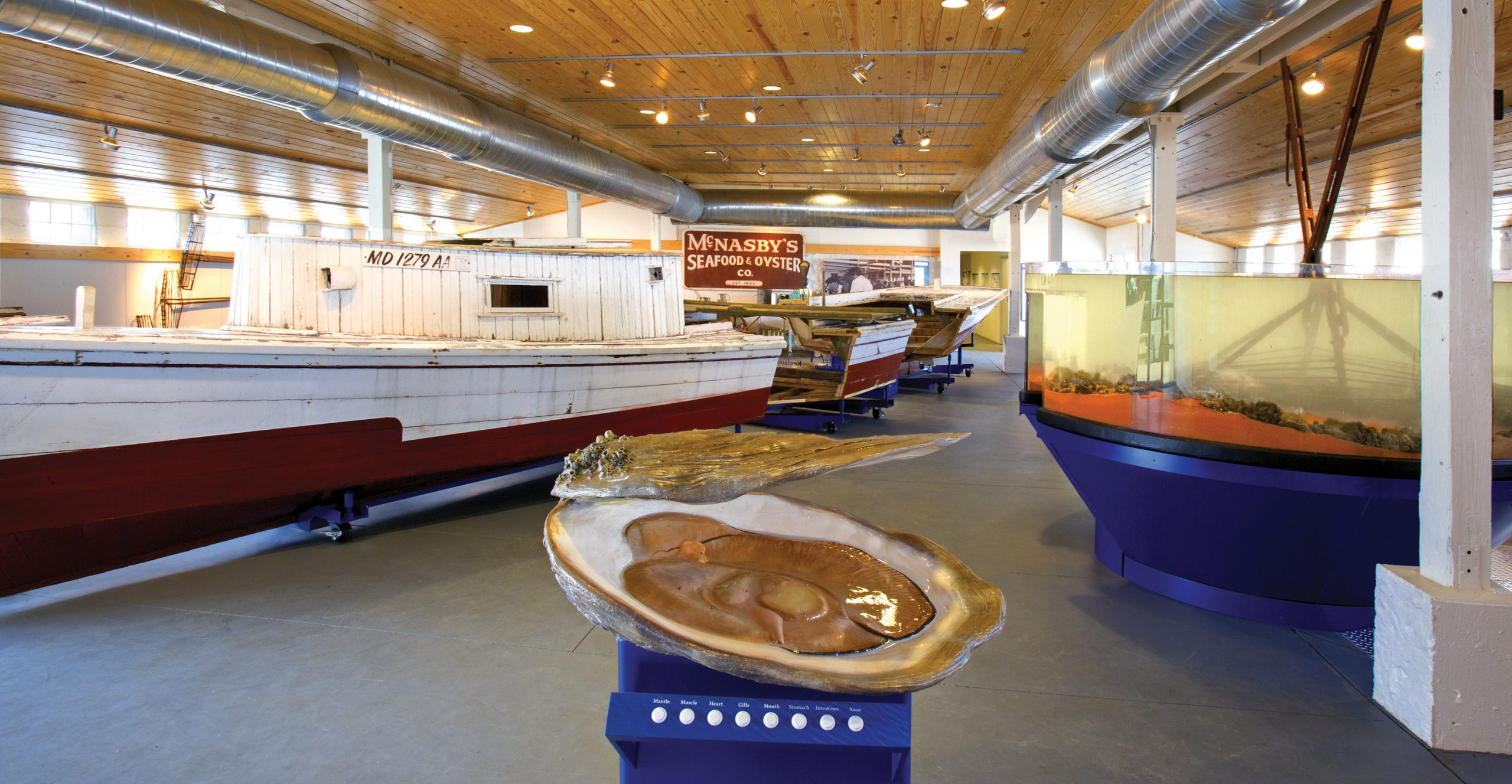 Project image 2 for Oysters on the Half Shell Exhibit, Annapolis Maritime Museum