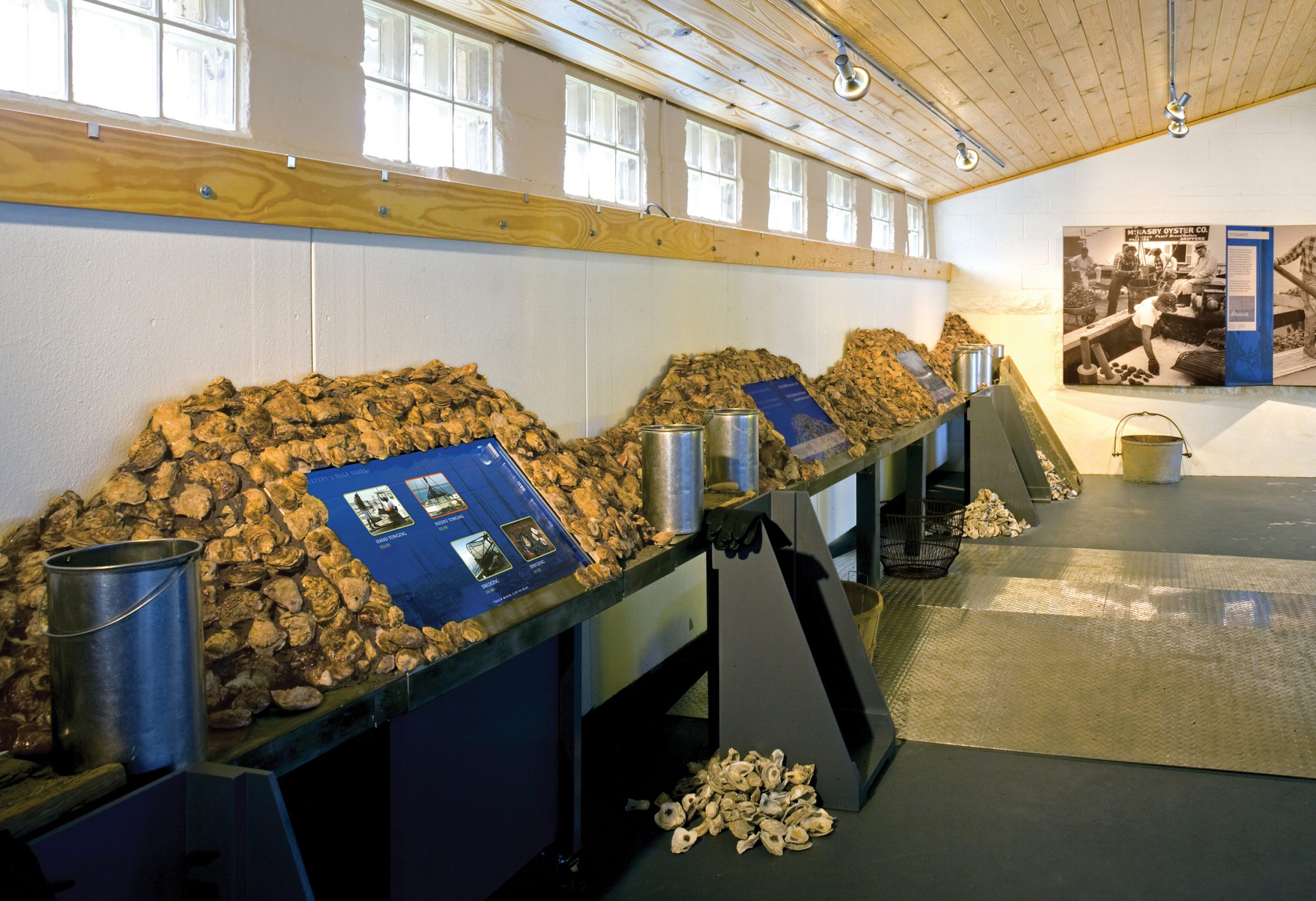 Project image 3 for Oysters on the Half Shell Exhibit, Annapolis Maritime Museum