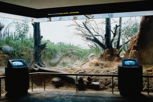 Weaverbird Interactive Camera