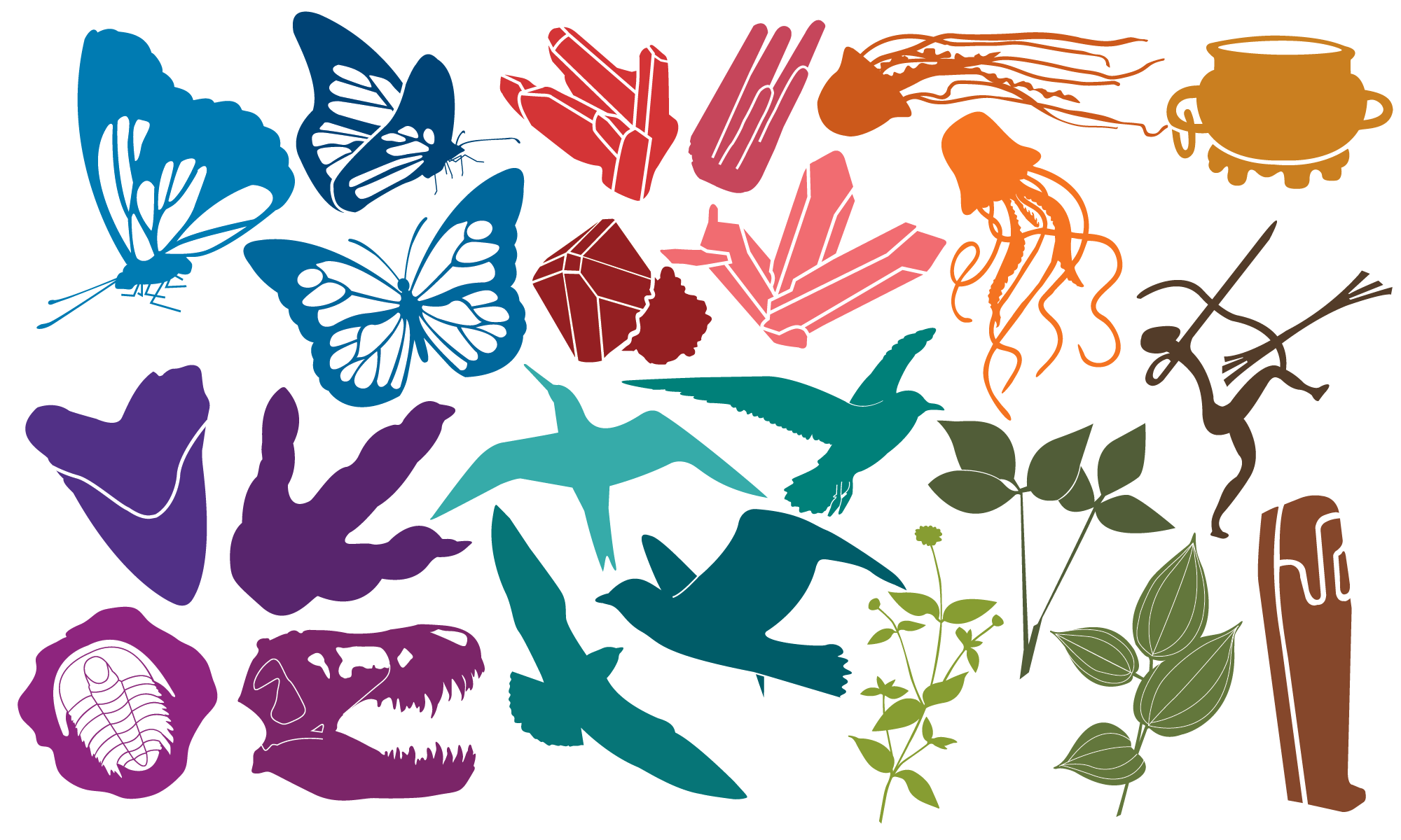 Project image 1 for Supergraphics, National Museum of Natural History